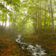 River in the wood — Stock Photo