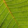 Close-up of green leaf — Stock Photo
