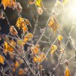 Foto de Stock  : Autumn leaves background