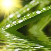 Raindrops on green grass — Stock Photo