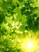 Grüne blätter mit sonnenstrahl — Stockfoto