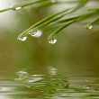 Water drops at firtree reflected in the — Stock Photo #1943409