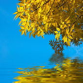 Yellow autumn leaves on blue sky backgro — Stock Photo