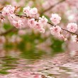 Spring flowers reflected in the water - Stock Photo