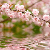 Spring flowers reflected in the water — Stock Photo