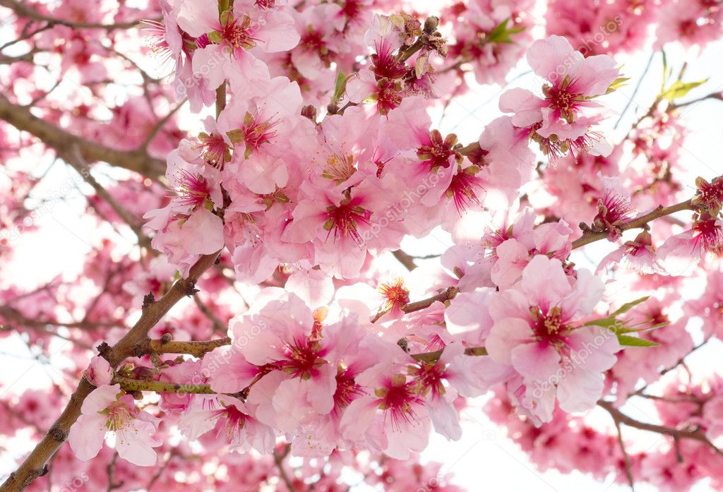 Spring apple blossoms — Stock Photo #2024238