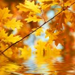 Autumn maple leaves background — Stock Photo