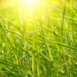 Stock Photo: Green grass sunset