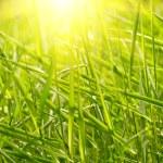 Green grass sunset — Stock Photo
