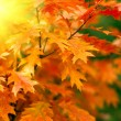Red autumn leaves background - Stock Photo