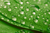 Green leaf with waterdrops — Stock Photo