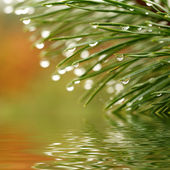 Water drops reflected in the water — Stock Photo