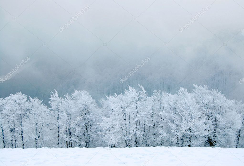 Winter landscape — Stock Photo #2042420
