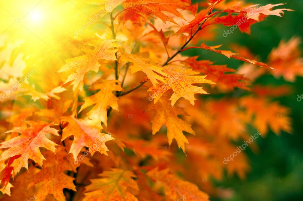 Red autumn leaves background  Foto Stock #2042575