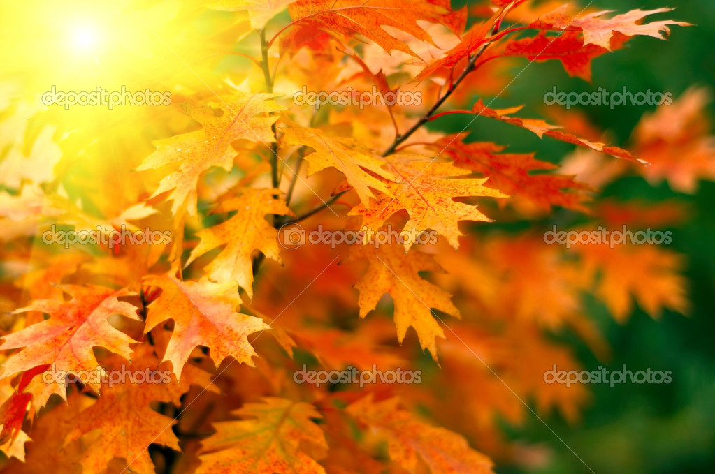Red autumn leaves background  Stock Photo #2042575