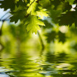 Green maple leaves reflecting in the wat — Stock Photo
