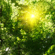 Sun in deep forest background — Stock Photo #2194614