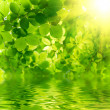Stock Photo: Green leaves with sun ray