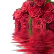 Beautiful red roses — Stock Photo #1756897