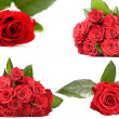 Dark red rose - Stock Photo
