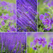 Collection of spring flowers - Stock Photo