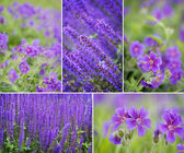 Collection of spring flowers — Stock Photo