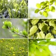 Beautiful green leaves Collection — Stock Photo