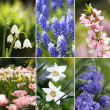 Collection of spring flowers — Stock Photo #1865140
