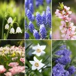 Stock Photo: Collection of spring flowers