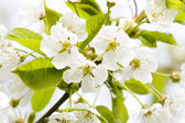 Flower tree on natural background — Stockfoto