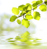 Leaves reflecting in the water — Stock Photo
