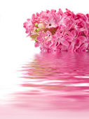 Beautiful flower reflected in water — Stock Photo