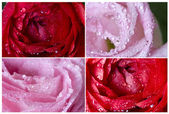 Collection of pink flowers — Stock Photo