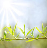 Sun beams and green leaves — 图库照片