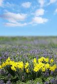 Schöne spring flower — Stockfoto