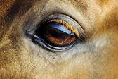 Horse eye — Стоковое фото