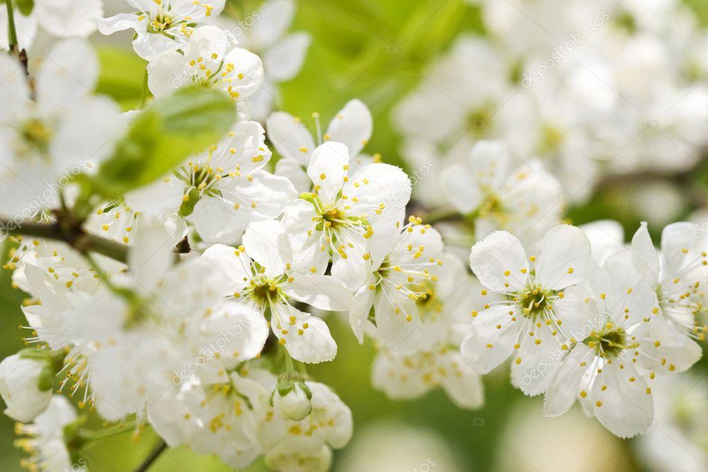 Natural Green Flower Flower Tree on Natural