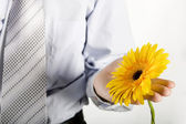 Business men holding a flowers — Stock Photo
