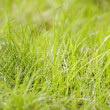 Green grass background — Stock Photo #2118460