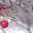 Apples on tree and first snow — Stock fotografie