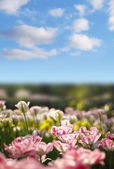 Green grass and flowers — Stockfoto