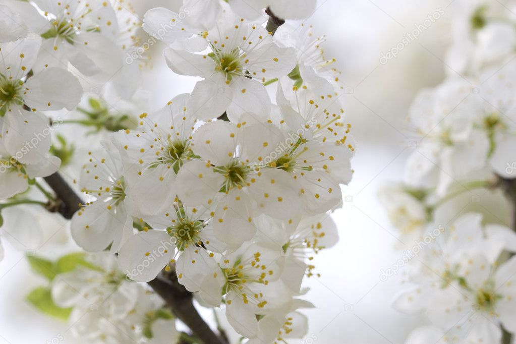   flower tree on natural background  Stock Photo #2118584