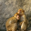 Stock Photo: Monkeys