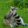 Royalty-Free Stock Photo: Lemur