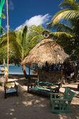 Tortola — Stock Photo