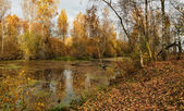 Autumn landscape of a pond in leaf — Stock Photo