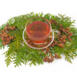 Thuja curative — Stock Photo