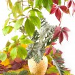 Stock Photo: Autumn bouquet in yellow vase