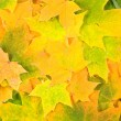 Background from yellow green leaves — Stock Photo