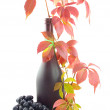 Green bottle with red wine — Stock Photo #1771773